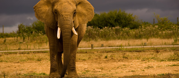 Kruger Park - South Africa's World Renowned Wildlife Icon