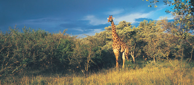 Tzaneen is located in the Mopani Region of the Limpopo Province in South Africa.